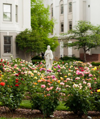 Belmont Garden