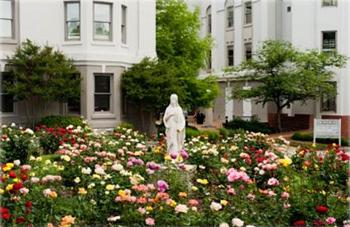 Belmont roses