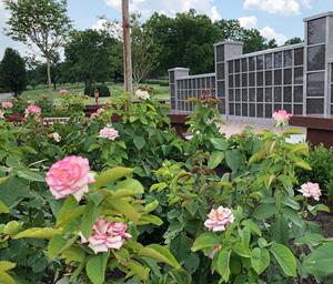 Lynn Anderson Rose Garden