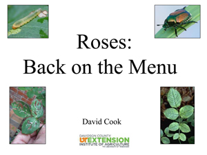 Roses_Back_on_the_Menu
